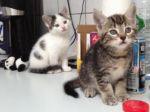 Katzenbabys-Hbn