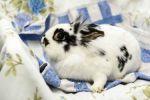 Kaninchen-2