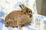 Kaninchen-5